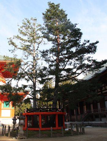 2014.4.9 高野山 (15).JPG