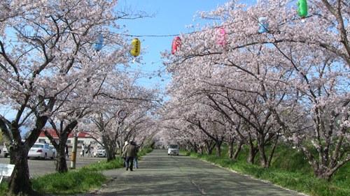2015.4.2 桜 (8).JPG