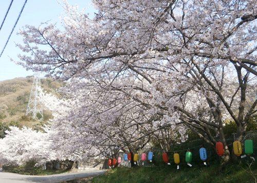 2015.4.2 桜 (9).JPG