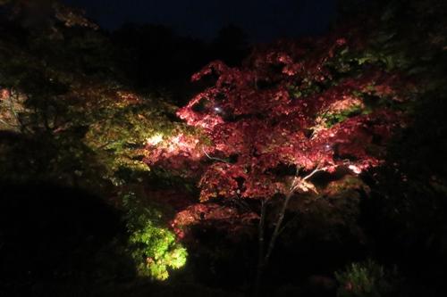 2017.11.4 弥彦公園1.JPG