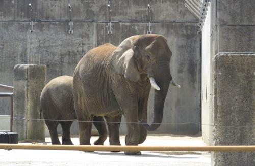 2018.4.3 動物園3.JPG