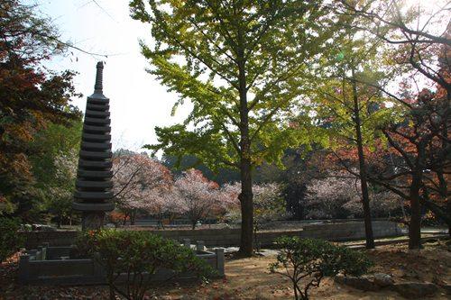 箸蔵寺 十三重の塔.JPG